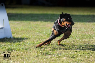 20150624_flyball_42392