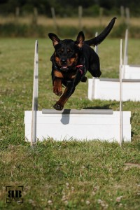 20150624_flyball_42395