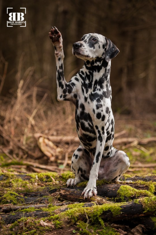photographe chien evreux